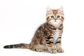 CAT 03 PE0025 01
