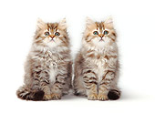 CAT 03 PE0026 01