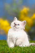 CAT 03 PE0031 01