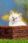 CAT 03 PE0033 01