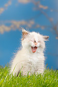 CAT 03 PE0035 01