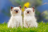 CAT 03 PE0036 01
