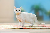 CAT 03 PE0039 01