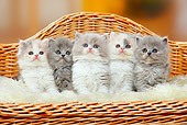 CAT 03 PE0040 01