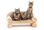 CAT 03 PE0041 01