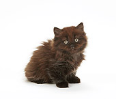 CAT 03 PE0042 01