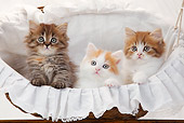 CAT 03 PE0044 01