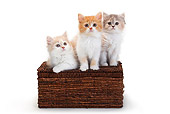 CAT 03 PE0046 01
