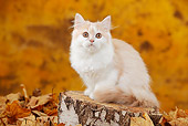 CAT 03 PE0048 01