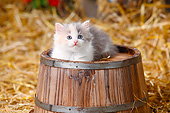 CAT 03 PE0050 01