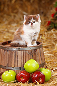 CAT 03 PE0051 01