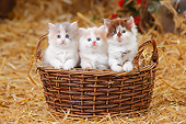 CAT 03 PE0052 01