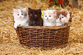 CAT 03 PE0053 01