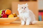 CAT 03 PE0055 01