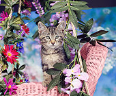 CAT 03 RK0018 04