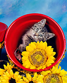 CAT 03 RK0024 02