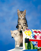 CAT 03 RK0027 05