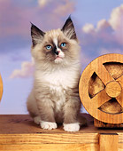 CAT 03 RK0029 02