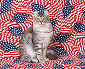 CAT 03 RK0113 03