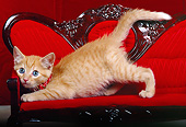 CAT 03 RK0138 03