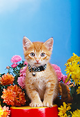 CAT 03 RK0160 08