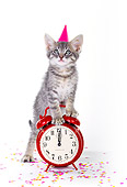 CAT 03 RK0185 02