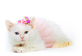 CAT 03 RK0208 09