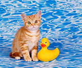CAT 03 RK0304 01
