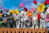CAT 03 RK0307 04