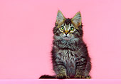 CAT 03 RK0358 12