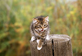CAT 03 RK0453 05