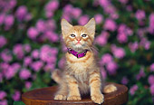 CAT 03 RK0505 03