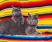 CAT 03 RK0691 04