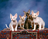 CAT 03 RK0737 02