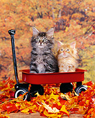 CAT 03 RK0743 04