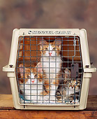CAT 03 RK0790 08