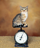 CAT 03 RK0805 03