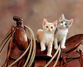 CAT 03 RK0832 04
