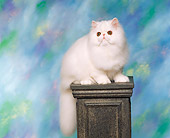 CAT 03 RK0902 05