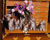 CAT 03 RK1009 10