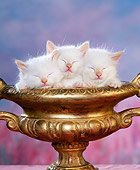 CAT 03 RK1043 01