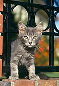 CAT 03 RK1091 17