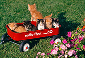 CAT 03 RK1103 07