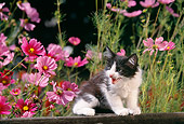 CAT 03 RK1221 02