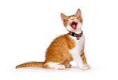 CAT 03 RK1386 01