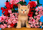 CAT 03 RK1423 18