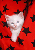 CAT 03 RK1597 01