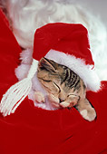 CAT 03 RK1680 02