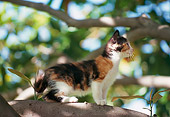 CAT 03 RK1799 02