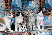 CAT 03 RK2351 02